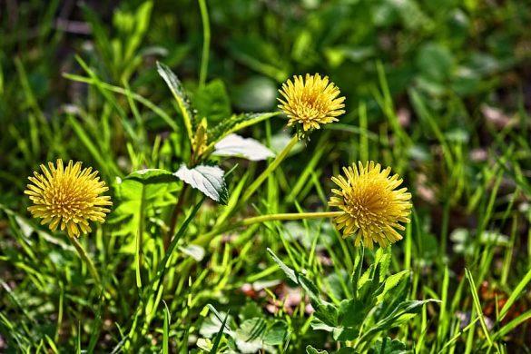 Añade flores cultivadas en casa a tu dieta