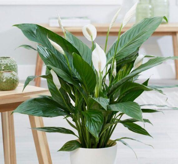 Cómo cuidar tus plantas de interior para que no mueran